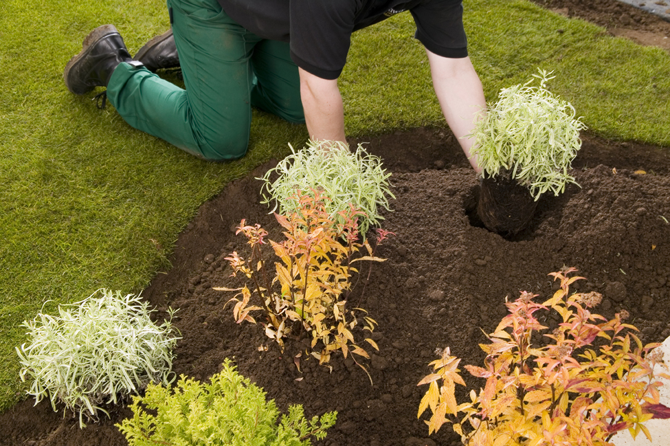 Rolawn beds and borders topsoil london lawn turf co for Lawn topsoil