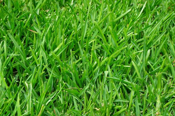 How to Establish new Lawn Turf Quickly
