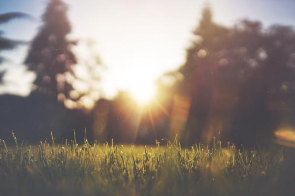 Your Guide to Caring for Your Summer Lawn