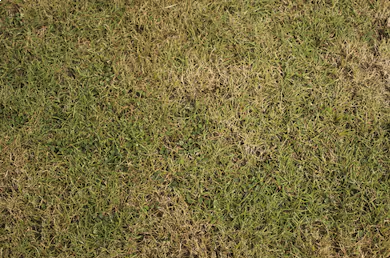 How to stop the hot weather ruining your lawn