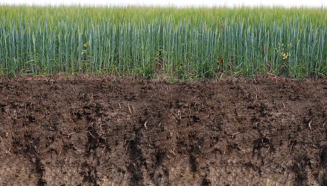 Garden Top Soil: Understand how top soil benefits the garden