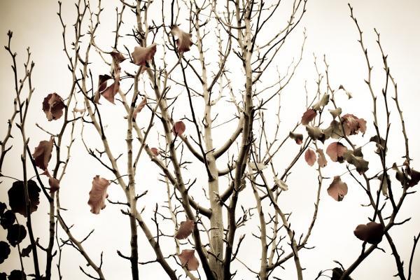 Winter Garden Landscaping: Don't Neglect Your Garden This Season