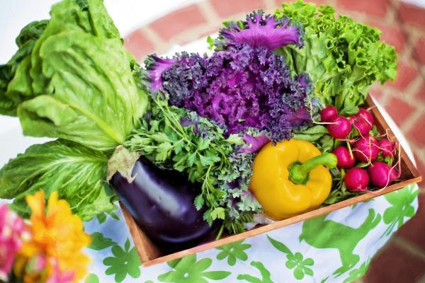 4 Basic Tips on Starting an Organic Garden