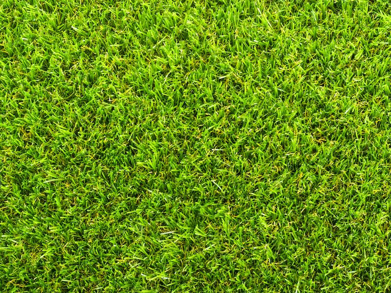 Top tips for artificial grass maintenance in autumn
