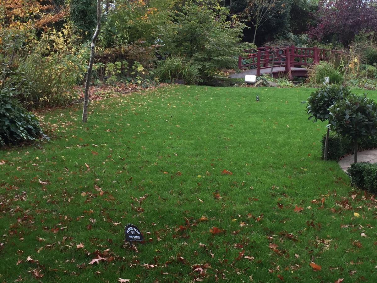 How to deal with fungus in your lawn turf