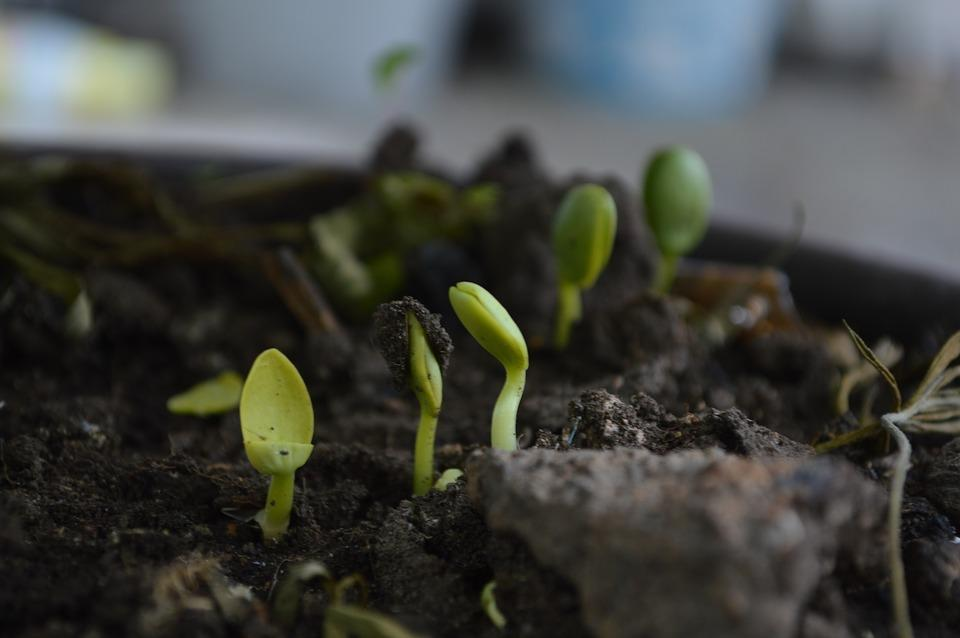 When is the best time to spread compost in your garden?