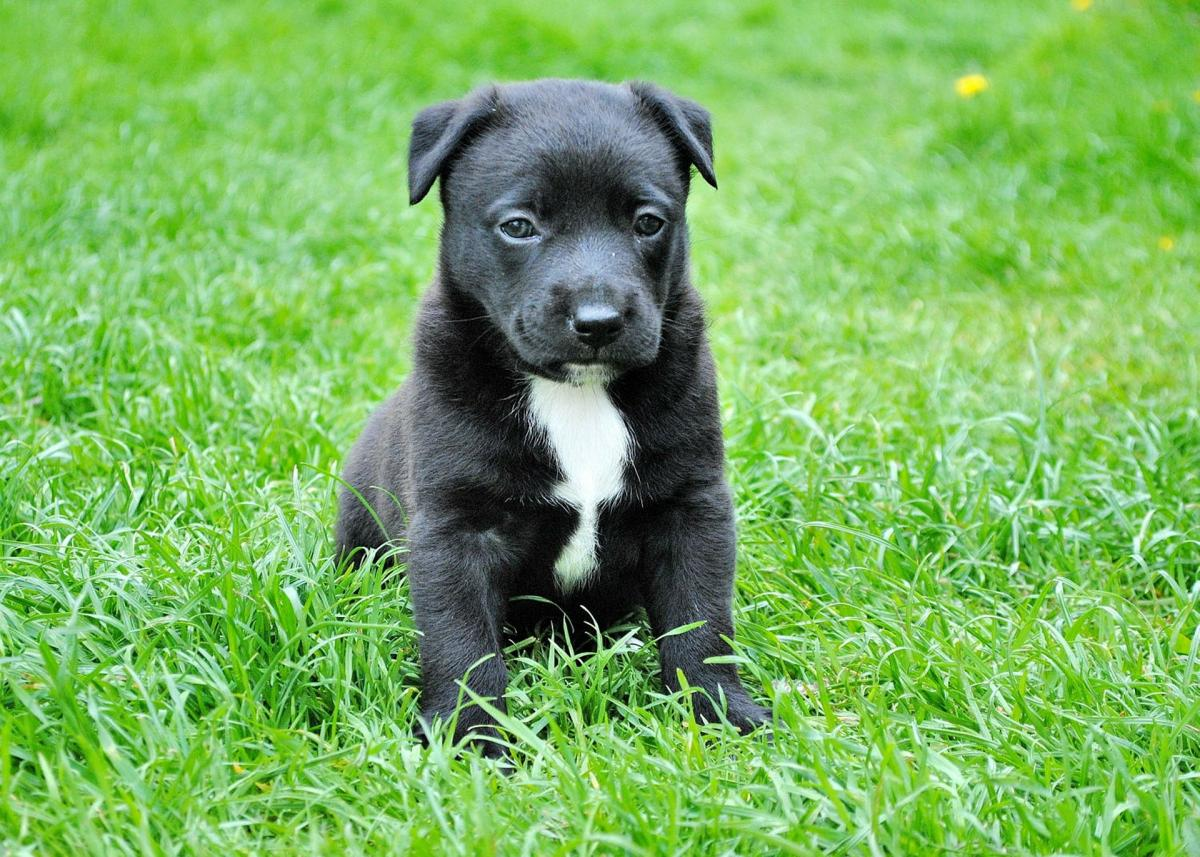 How to Handle Brown Dog Urine Spots on Grass