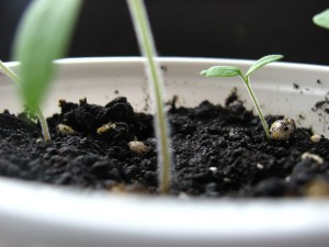 a picture of a seed growing