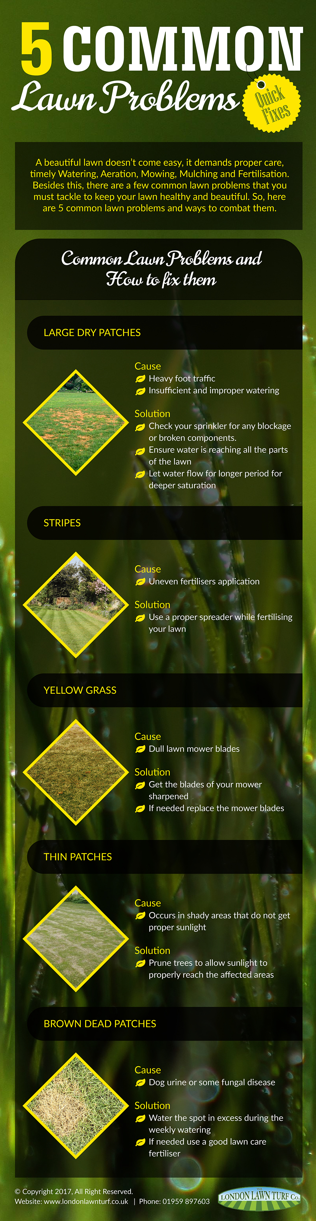 5 common Lawn Problems
